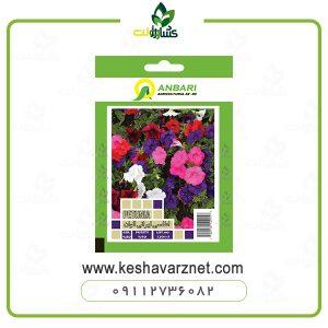 بذر گل اطلسی