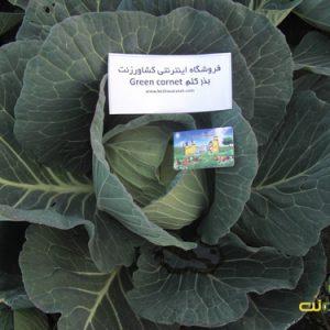 بذر کلم گرین کورنت