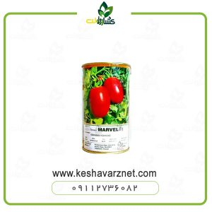 بذر گوجه مارول
