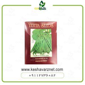 بذر لوبیا سبز یکتا