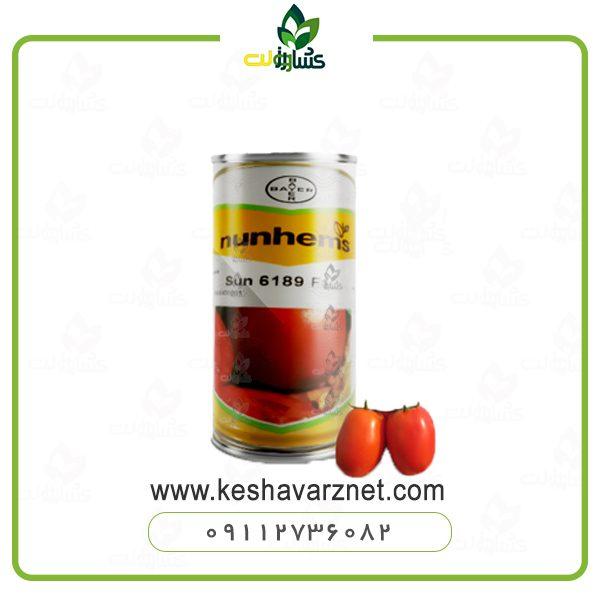 بذر گوجه سانسید 6189