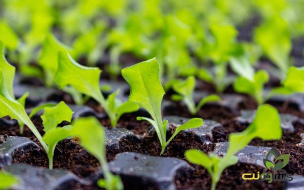 کاشت بذر در سینی نشا