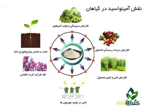 نقش آمینواسید در گیاهان