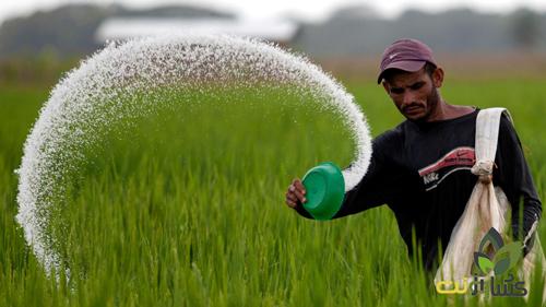 مراحل کود دهی برنج