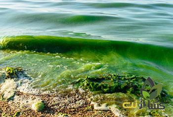 کود جلبک دریایی