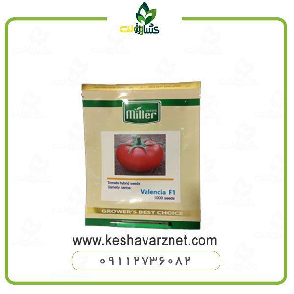 بذر گوجه دافنیس