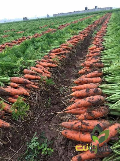 برنامه-غذایی-هویج